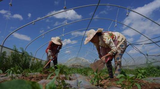 到2022年3大主粮作物农业险覆盖率达70%以上