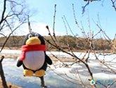 寻景丨三月末的山庄,能否满足你对春天的幻想!