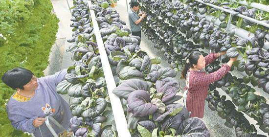 桃城:现代农业铺就乡村致富路