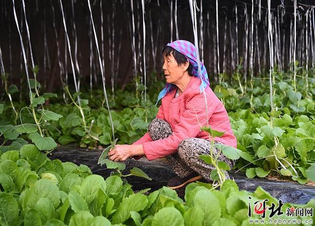 文安:现代农业助推乡村振兴