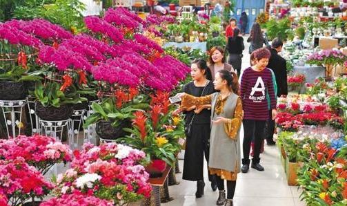 唐山:春节临近 鲜花扮靓佳节