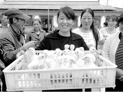 贫困村民领到了爱心鸡鹅苗