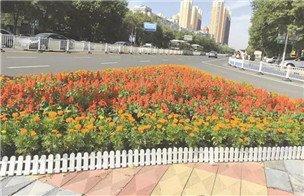 百万盆鲜花扮靓衡水主城区