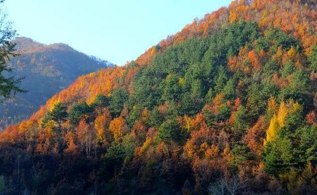 层林尽染驼梁山 秋色正在赶来