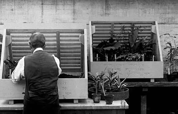 植物猎人:寻觅异国植物的艰辛远行_大燕网河北站_腾讯网