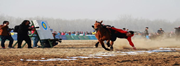 2019中国安平国际马联(FEI)耐力达标赛在衡水开赛