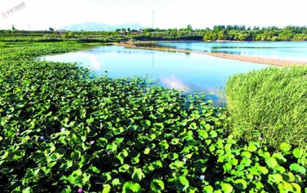 华北最大湿地公园显雏形