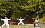 遵化:古银杏旅游文化节引万名京津冀游客