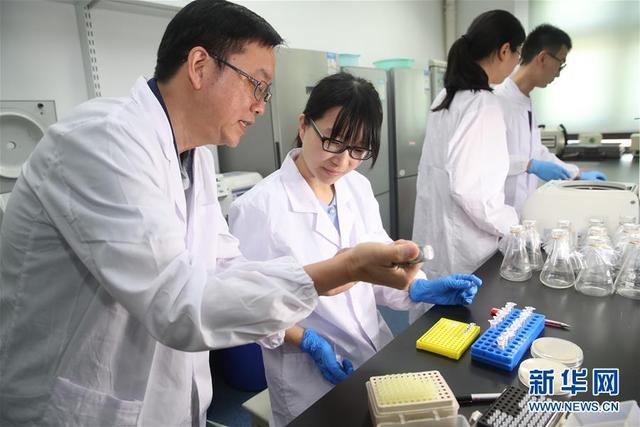 人造单条染色体真核细胞问世