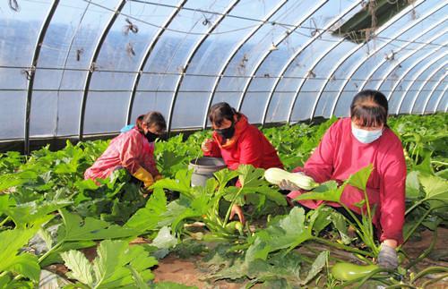 平泉市抓好春耕生产和特色产业发展