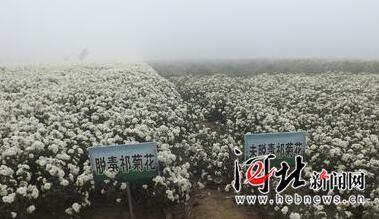河北省又有2个产品通过国家农产品地理标志专家评审