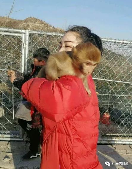唐山一旅游区观赏幼猴被盗 悬赏3000元急寻