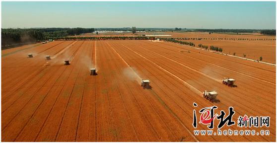 河北省小麦收获过半 抢收抢种成今年显著特点