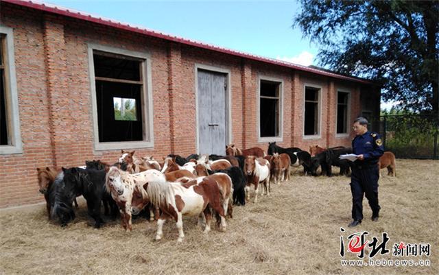 河北省首次进口36匹荷兰矮马