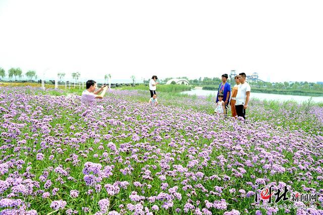 冀州:利用生态资源做强旅游产业