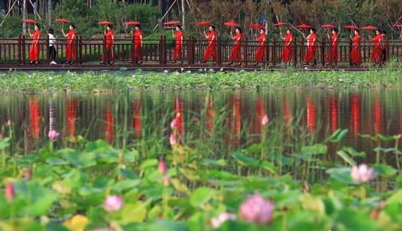 衡水大力推动全域休闲农业和乡村旅游发展
