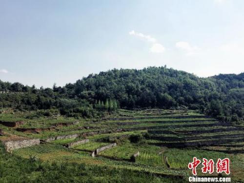 中国林业:森林覆盖率达21.66% 今年拟造林超1亿亩