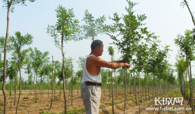 """冀州区:创新模式 激活现代农业发展""""新动能"""""""