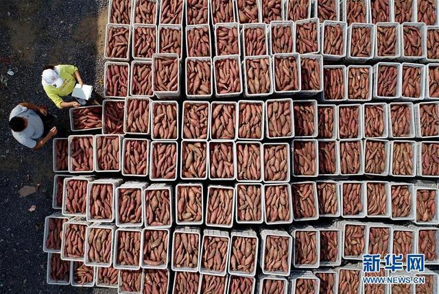(社会)(1)河北滦南:发展特色农业促增收