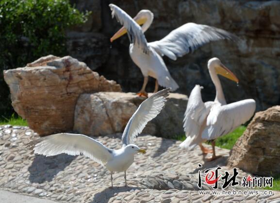 石家庄市动物园里的动物们期待着游客的到来.图为火烈鸟.