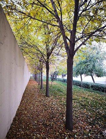 大城这些关于秋天的好诗美景,你都知道吗?