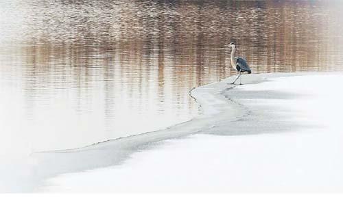 冬季到衡水湖来看鸟儿