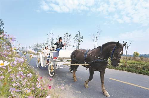 安平县大力发展马产业有效拉动经济快速发展