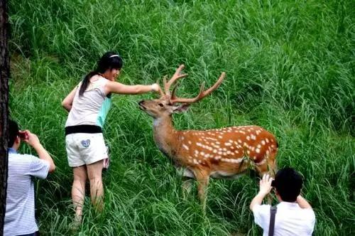 北京故宫为啥看上咱承德的梅花鹿?