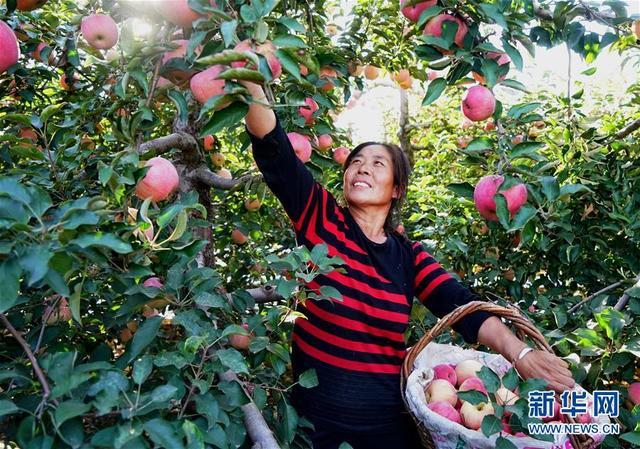 (经济)(1)果树满坡富农家