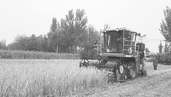 袁隆平旱稻在阜城县试种成功意味着可在华北推广