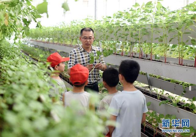 河北衡水:学农事 乐暑假