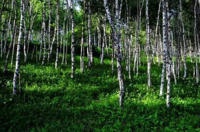 """自然风貌保存最完好的""""围场""""――五道沟风景区"""