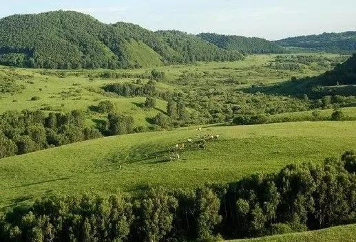 森林童话――御道口草原森林风景区