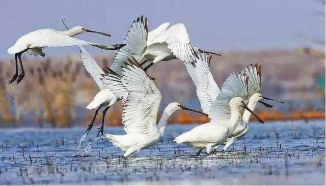 候鸟天堂――闪电河湿地公园