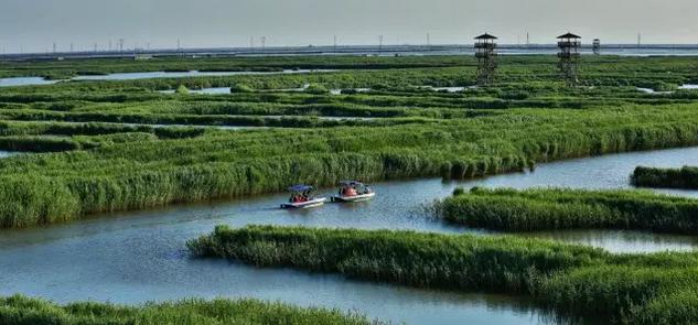 春天到了!绝美的曹妃甸湿地