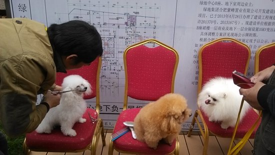 美容师为宠物狗做发型图片