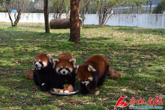 合肥野生动物园出招给动物防暑降温