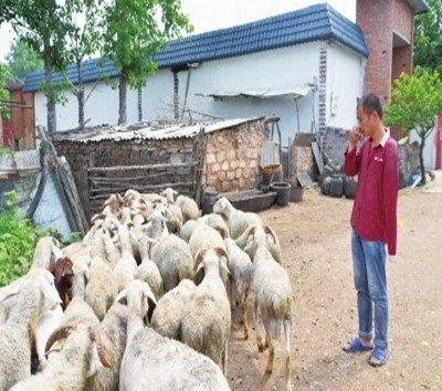 洛阳男子用独臂种瓜养羊撑起家 凭借努力盖了一栋房