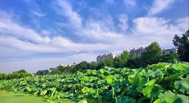在漯河的沙澧河风景区沙河北岸,历史文化广场西,巴山路以东,有两个