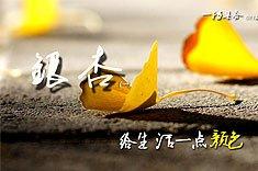 011期:银杏:给生活一点颜色