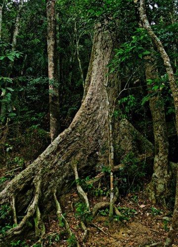 这片热带原始雨林也是一个动物世界.