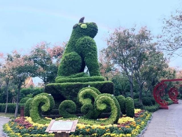 大家好,这是今年菊花文化节的菊展造型 @你