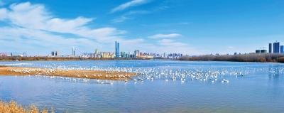 河南这个市 成唯一入选央视《魅力中国城》的城市