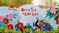 郑州的洛阳城 看牡丹最近