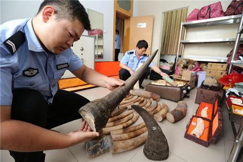 涉案超200万!中原地区最大野生动物制品案6人获刑