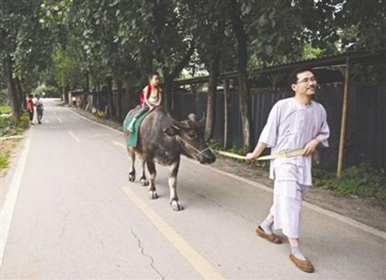 父亲醉心国学让儿骑牛上学 自曝还骑过驴