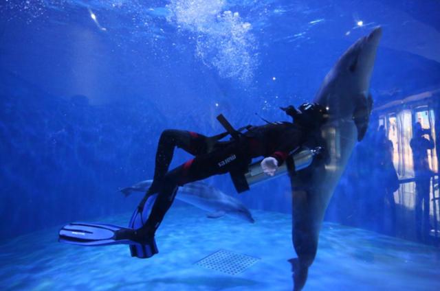 洛阳再添两只海豚 洛阳户籍海豚数量达到4只