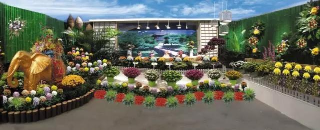 菊醉金秋 | 中国(开封)第六届国际菊花展即将盛大开幕