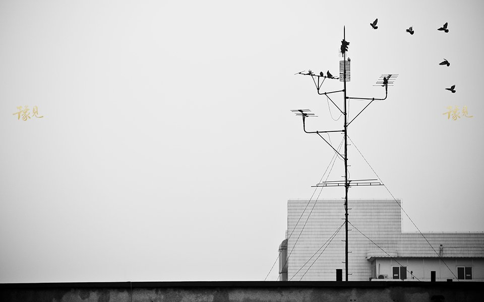 豫见第十八期:游荡在城市里的孤独灵魂16