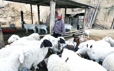 """河南""""无臂羊倌""""三退低保 脱贫后带领村民共同致富"""